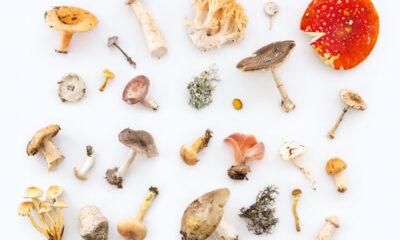 Mix van paddenstoelen