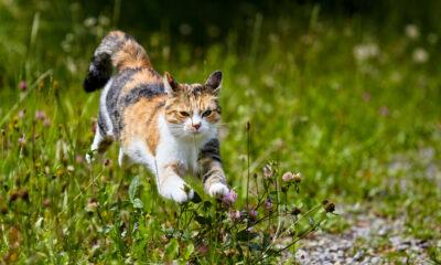 Kat in tuin