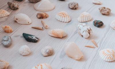 Verzameling schelpen
