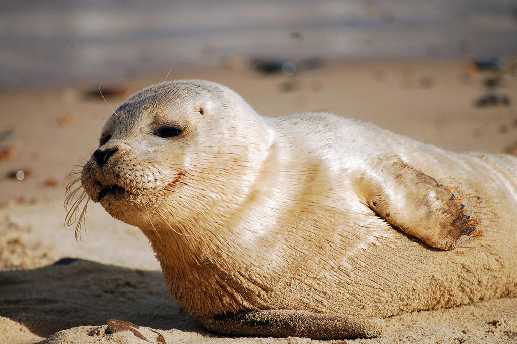Ook zeehonden lachen